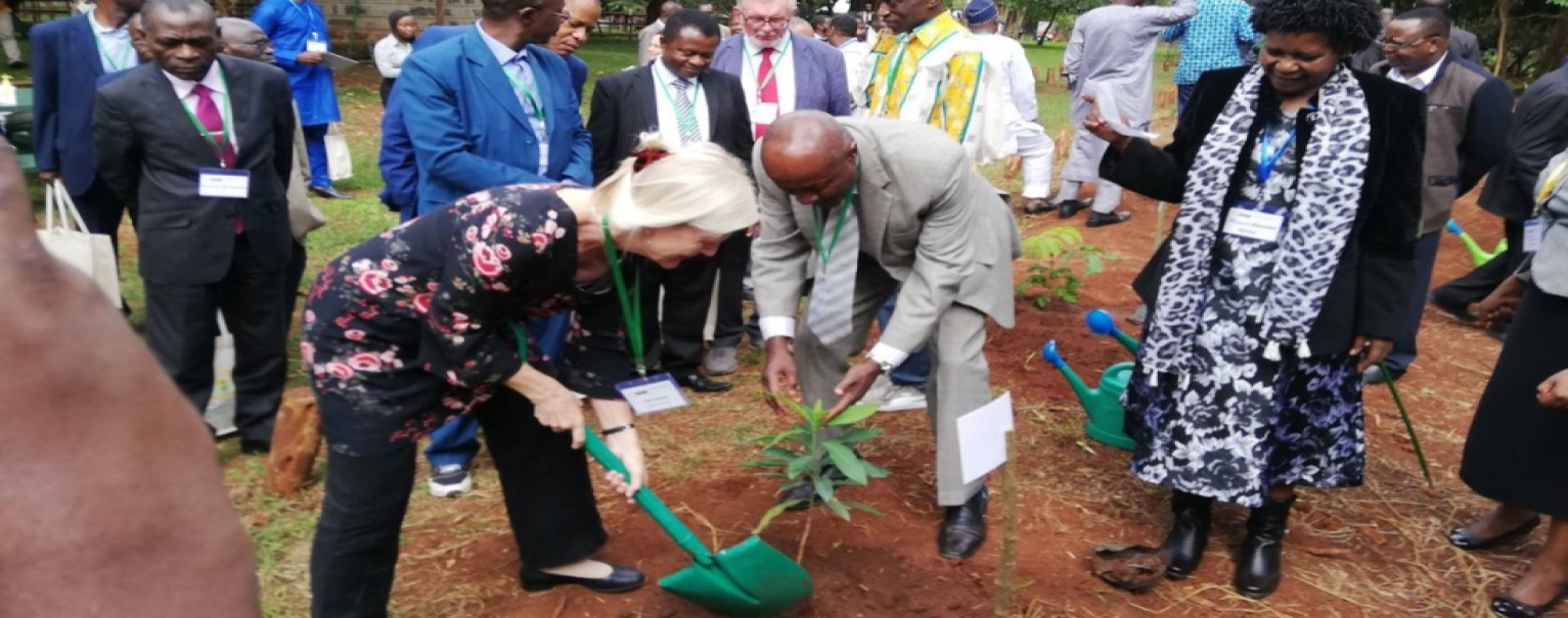 Celebrating 10 years of commitment to Africa's forests and tree resources
