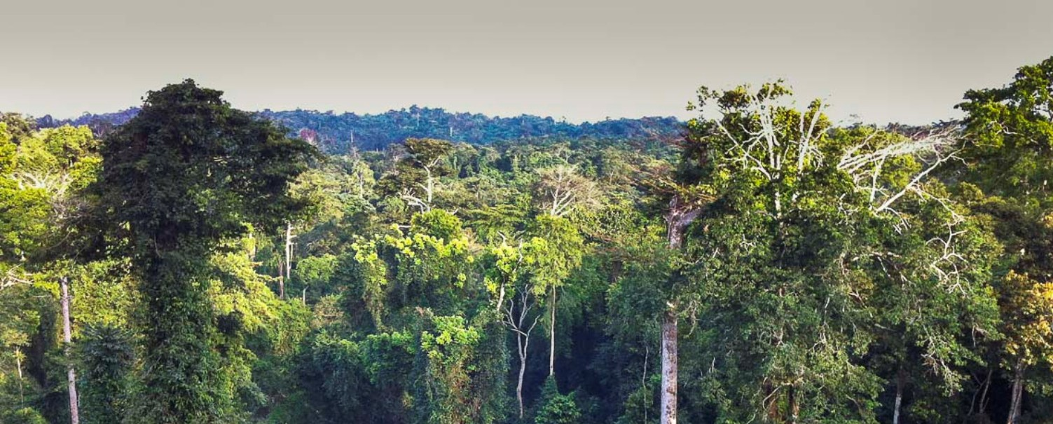 AFF support to accelerating REDD+ implementation in Africa