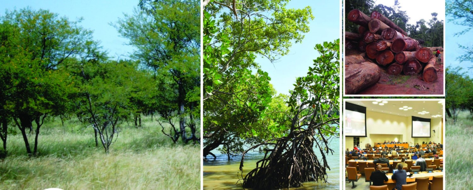 AFF Sub-regional training webinar for Francophone Africa on understanding and mainstreaming into forestry national policies, plans and actions of decisions from global and regional climate change related processes